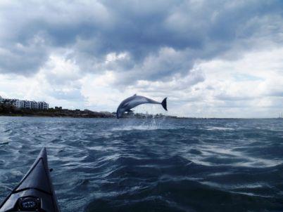 Dolphin in Dalkey Sound